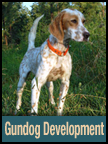 Gun Dog Development