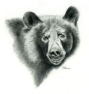 blackbearweb1.jpg