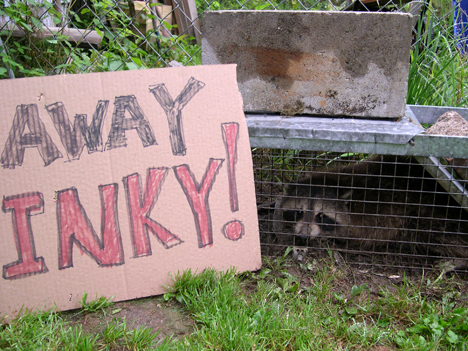 stinkcoon2.jpg